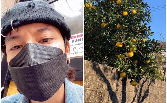 """Chê một số bạn trẻ Việt """"tham lam và ngu dốt"""" vì tự ý hái trái cây của người Nhật, TikToker 1 triệu follows khiến dân mạng tranh cãi nảy lửa"""