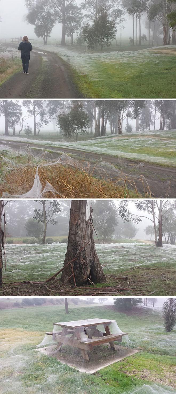 16 ví dụ cho thấy thiên nhiên Úc đáng sợ ra sao: Ai yếu tim chắc ngất khi gặp vị khách số 3 - Ảnh 13.