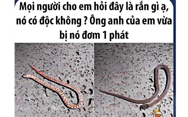 Thực hư loài rắn ngay tại Việt Nam cắn 1 phát phải đi tìm quả chuối chín để ăn, nếu muộn là 'chỉ được cúng chuối xanh'!