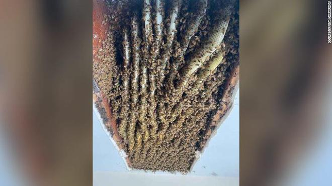 Nghi ong làm tổ trong nhà, người phụ nữ gọi người đến kiểm tra, kết quả khiến ai cũng ngỡ ngàng - Ảnh 1.