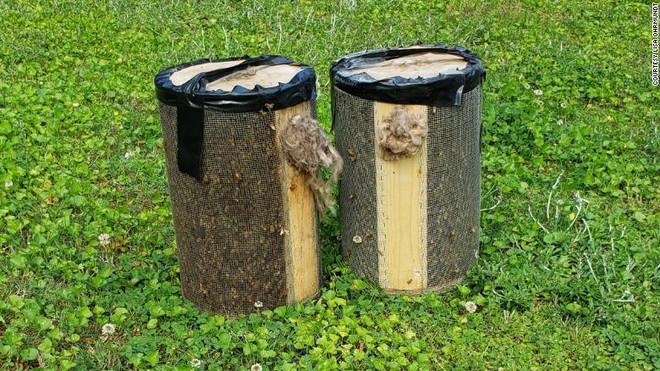 Nghi ong làm tổ trong nhà, người phụ nữ gọi người đến kiểm tra, kết quả khiến ai cũng ngỡ ngàng - Ảnh 3.