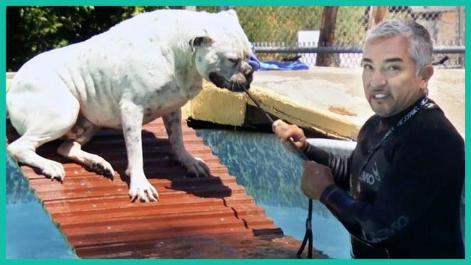 Thấy chó của mình bị chó bò tấn công, nhà huấn luyện ra tay thu phục bằng vòng kim cô - Ảnh 1.