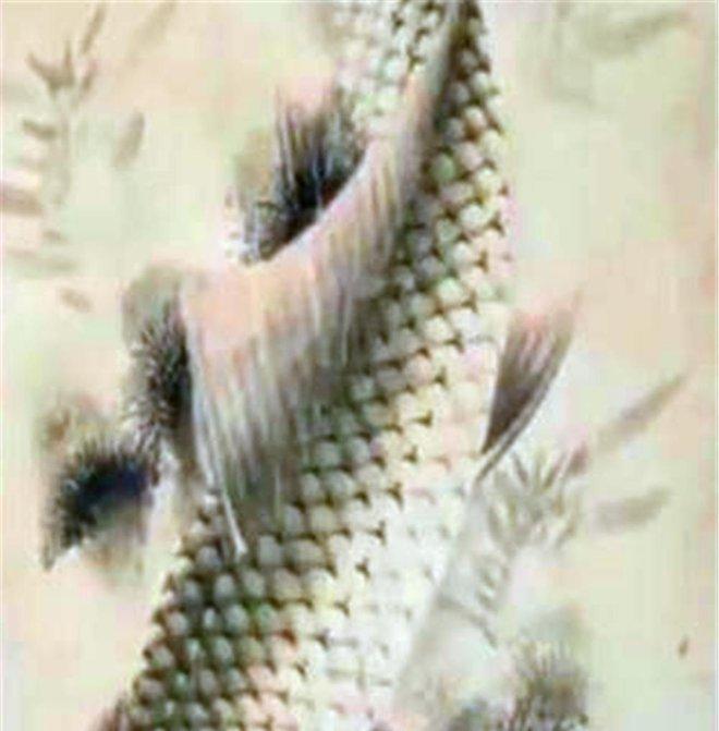 Cụ ông bỏ ra ít tiền để mua bức tranh cá ở ven đường - Chuyên gia thẩm định: Chúc mừng! Ông vừa sở hữu báu vật - Ảnh 1.