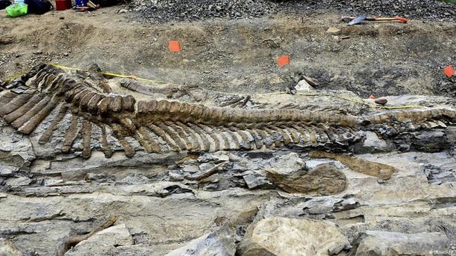 Phát hiện loài khủng long... biết nói sống ở Mexico 72 triệu năm trước - Ảnh 2.