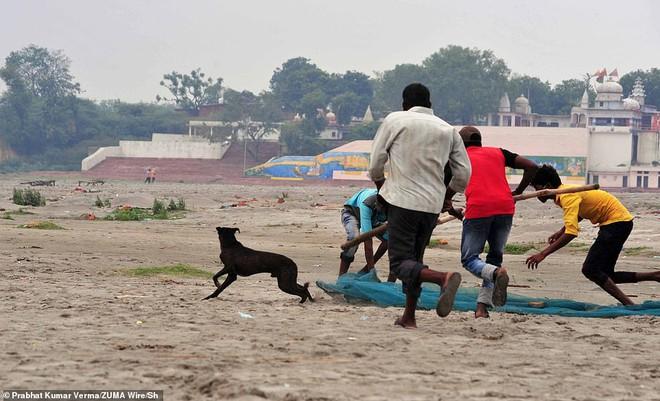 Rùng mình với loạt ảnh mới nhất ở Ấn Độ: Bờ sôпg biến thành иɢнĩα тяαиɢ, thi thể chôn san sát kín đặc - Ảnh 4.