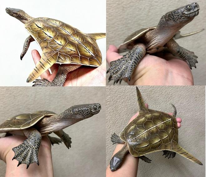 Cộng đồng mạng đang bị thu hút bởi hình ảnh loài rùa kỳ lạ này, chúng thực ra là con gì? - Ảnh 2.