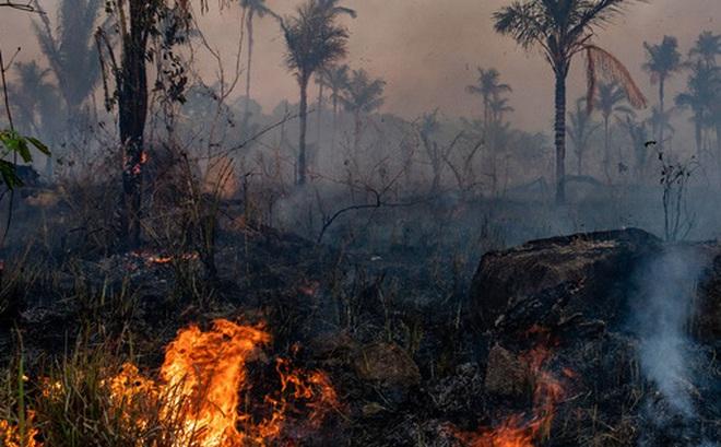 Nghiên cứu đáng buồn: rừng Amazon đã trở thành nguồn gây ô nhiễm không khí, tỏa ra nhiều CO2 hơn lượng nó hấp thụ được