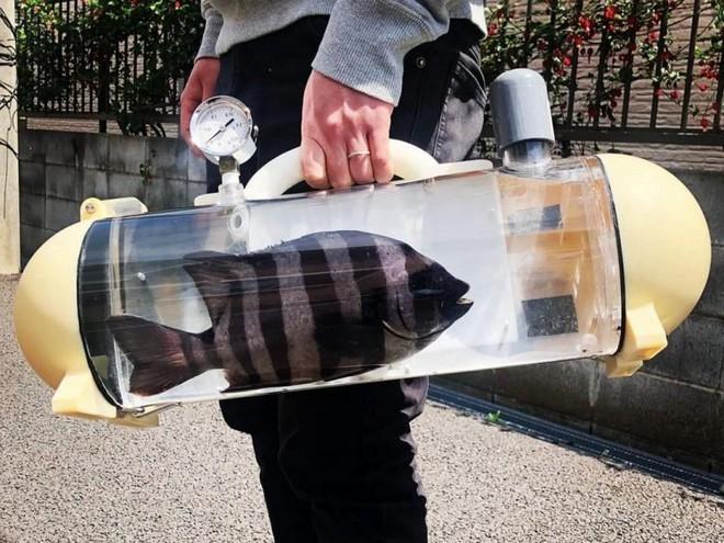 Túi trong suốt độc lạ dành riêng cho cá cảnh đi khắp muôn nơi - Ảnh 1.