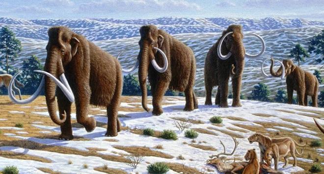 Xương voi ma mút thời kỷ Băng hà quý hiếm được tìm thấy ở Florida - Ảnh 1.