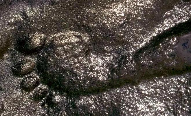 Phát hiện bí ẩn gây chấn động về dấu vết người đàn ông 290 triệu năm tuổi - Ảnh 1.