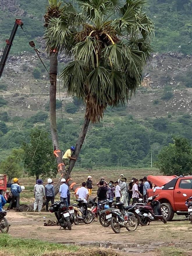 Cây thốt nốt tình yêu ở Tây Ninh gãy đổ và cách cấp cứu cực đỉnh ngay sau đó - Ảnh 5.