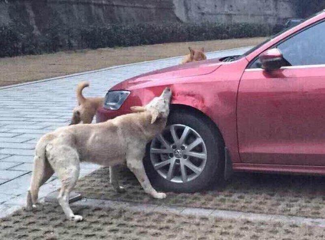 Chó hoang nằm bên đường bị chủ xe đá bay ra chỗ khác, 10 phút sau quay lại, anh ta hối hận không kịp - Ảnh 2.