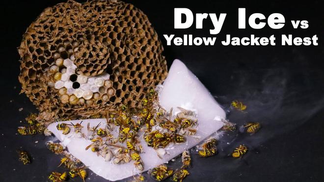 Lấy đá khô lấp miệng tổ ong bắp cày hung dữ: Kết quả ngoài mong đợi! - Ảnh 1.