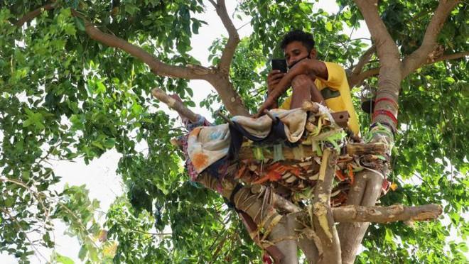 Ấn Độ: Nhiều bệnh nhân Covid-19 tự cách ly hàng chục ngày trên cây như trong phim Tarzan - ảnh 1