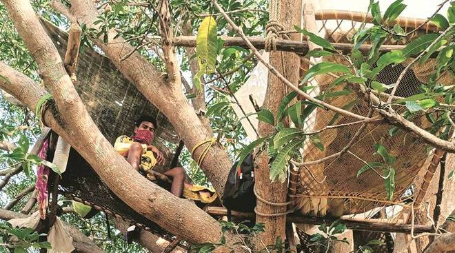 Ấn Độ: Nhiều bệnh nhân Covid-19 tự cách ly hàng chục ngày trên cây như trong phim Tarzan - ảnh 3