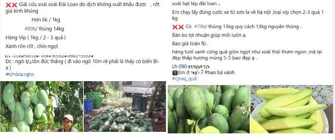 Nông sản rớt giá, nông dân miền Tây khóc thét vì giá xoài, mít chỉ còn 2.000 - 3.000 đồng/kg - Ảnh 2.