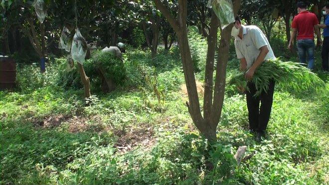 Lai lịch người đàn ông Pháp trồng cả vườn cần sa ở bãi giữa sông Hồng - Ảnh 2.