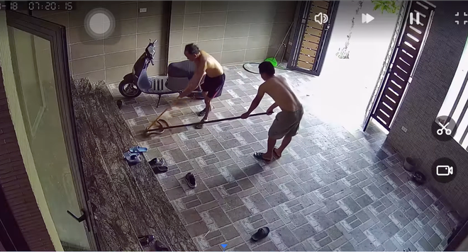 Kinh hãi con rắn lớn trườn nhanh vào nhà dân ở Nghệ An, tấn công chú chó - Ảnh 4.