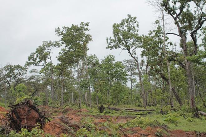 Hậu cáo buộc bầu Đức phá rừng: Hỏi dân