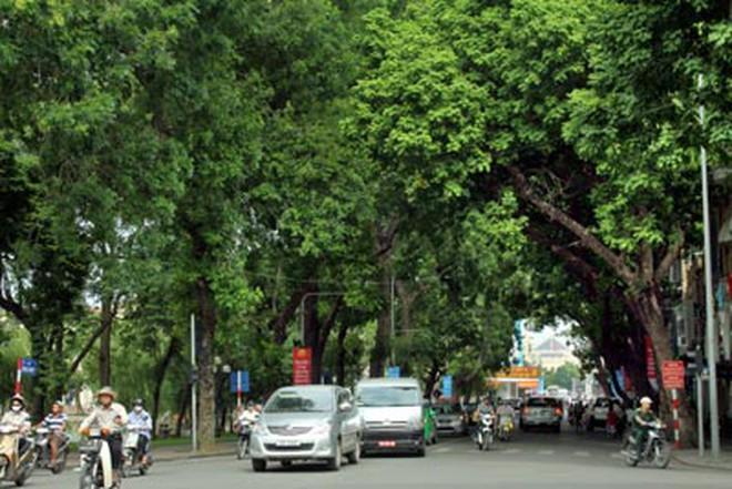 Nhiều cây xanh ở Hà Nội bị xăm vỏ, đổ axit