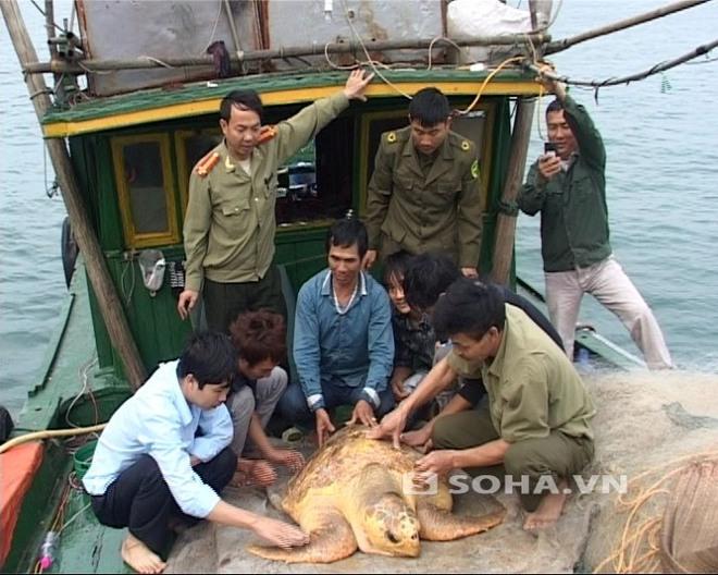 Quảng Ninh: Bắt được rùa biển màu vàng quý hiếm nặng gần 100 kg
