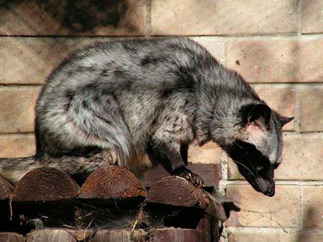 Cấm các loại quà biếu là sản phẩm từ động vật hoang dã