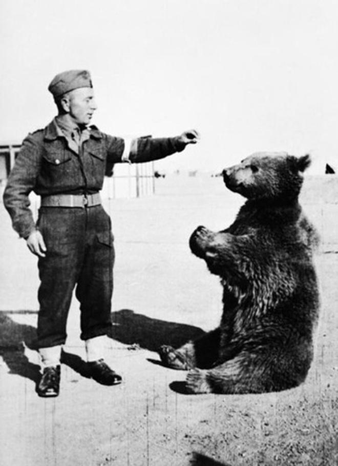 Chuyện ít biết về huyền thoại chiến binh gấu của Ba Lan