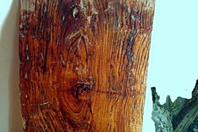 Náo loạn vì vớt gỗ sưa tiền tỷ trên sông