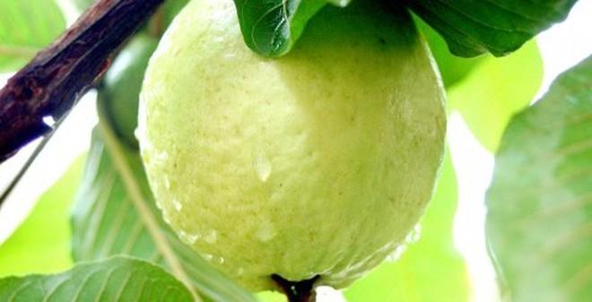 5 loại trái cây rẻ tiền nhưng cực tốt cho ngày nóng