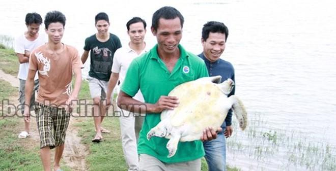 Kiểm tra cống thoát nước, bắt được rùa biển nặng hơn 10kg