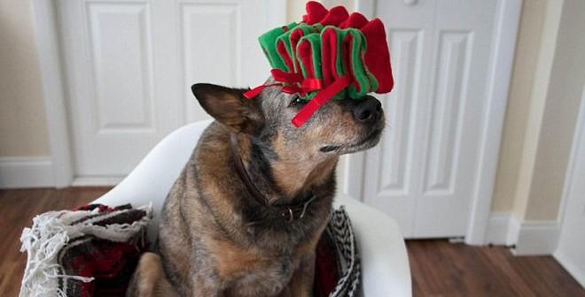 Chú chó giữ thăng bằng cực đỉnh trổ tài đón năm mới