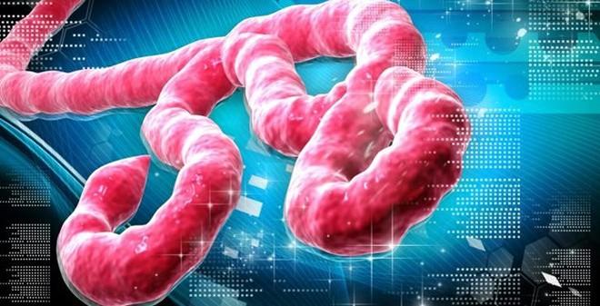 Đại dịch Ebola: Đã ở mức báo động khẩn cấp quốc tế!