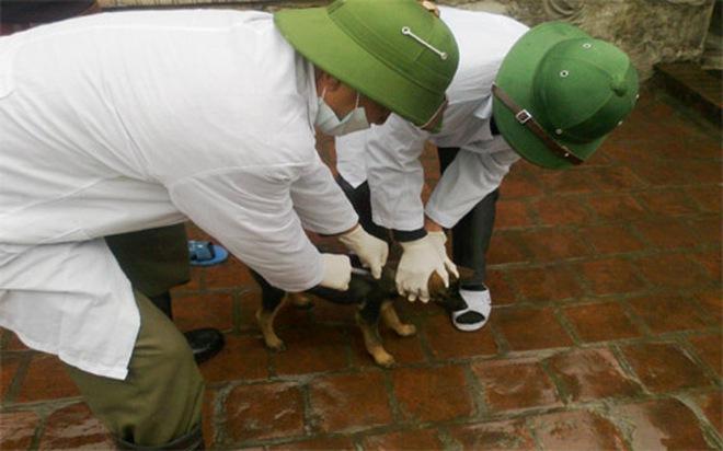 Chó dại cắn 2 người chết, 8 người bị thương