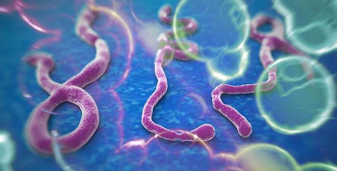Tất cả những việc phải làm để phòng nhiễm virut Ebola