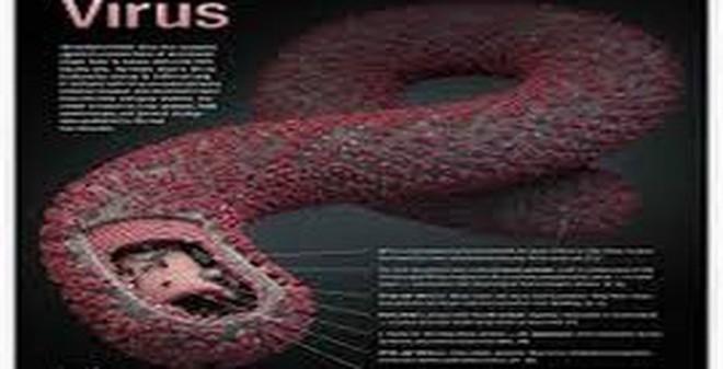Rợn người hình ảnh chết chóc ở tâm đại dịch Ebola