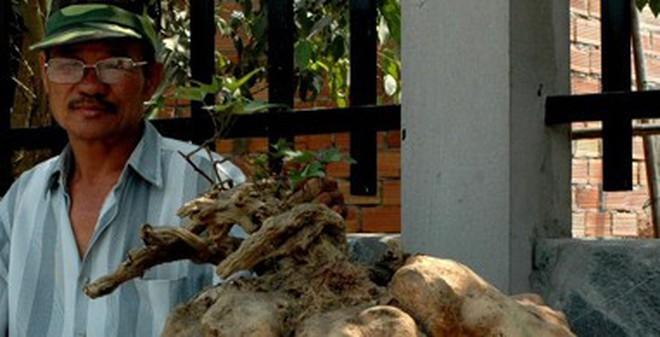 Củ khoai 38kg giá hơn mười triệu đồng
