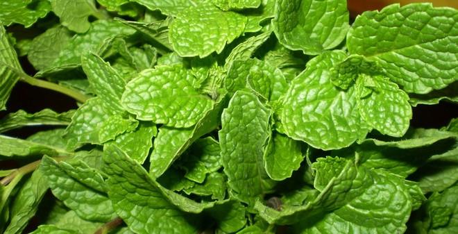 10 loại rau nên thường xuyên có trong nhà đề phòng sự cố sức khỏe