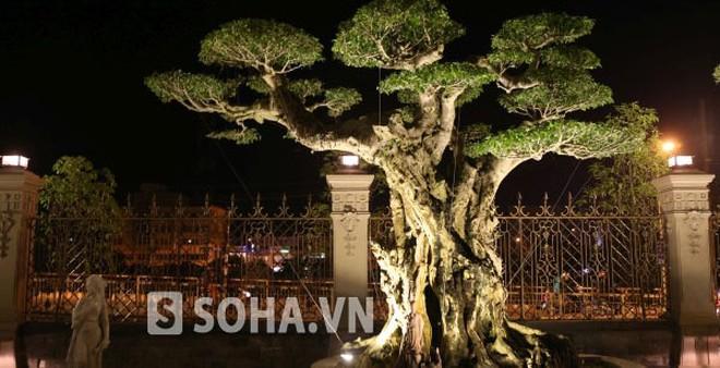 Chiêm ngưỡng những vườn cây cảnh bạc tỷ của đại gia Việt