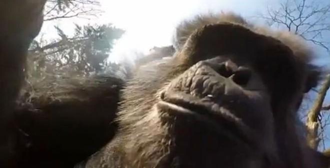 """Video: Tinh tinh """"diệt gọn"""" máy bay không người lái bằng gậy"""