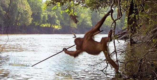 5 loài vật có trí thông minh không kém con người
