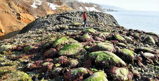 300 mét bờ biển Nhật Bản trồi lên trong một đêm
