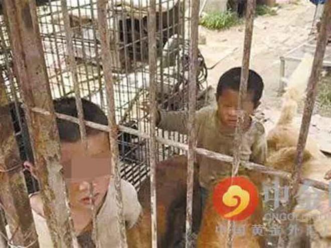 2 anh em bị nhốt trong cũi, sống chung với đàn chó