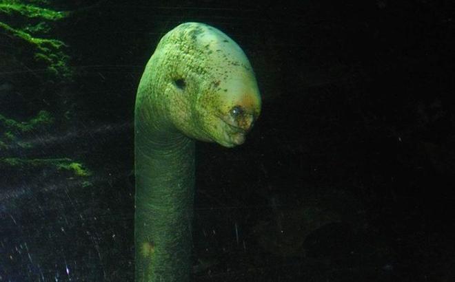 """5 loài """"quái vật"""" khiến bạn không tin là có thật ở dưới đáy biển"""