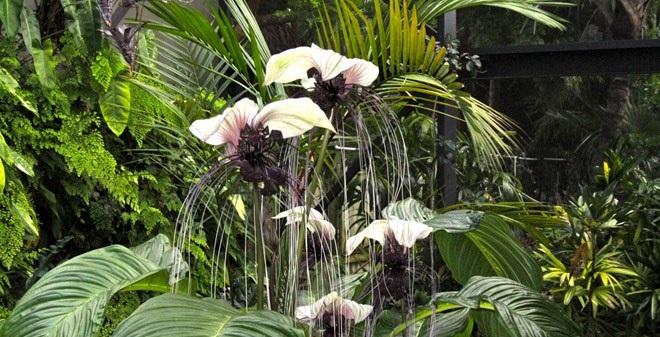 """30 loài hoa """"dị"""" nhất hành tinh (phần 1)"""