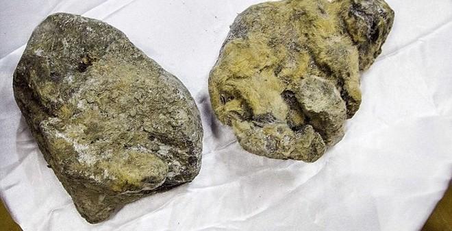 Chấn động với phát hiện xác ướp 2 sư tử hang hơn 12.000 năm tuổi