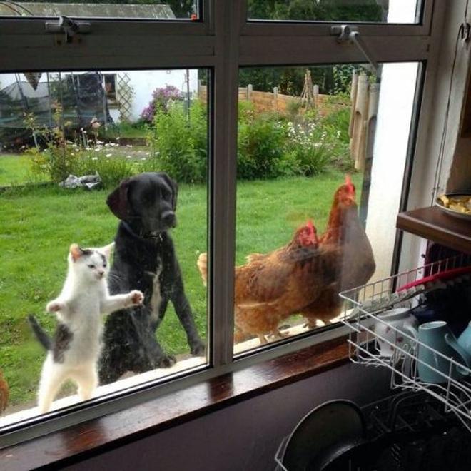 """""""Cười méo mồm"""" khi động vật bị nhốt ngoài cửa"""
