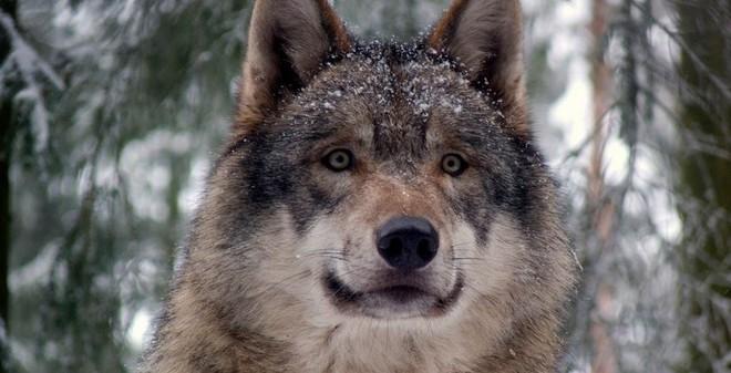 Top 10 động vật ăn đêm đẹp nhất thế giới