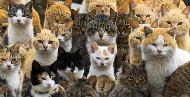 24h qua ảnh: Mèo đông gấp 6 lần người trên đảo Nhật Bản