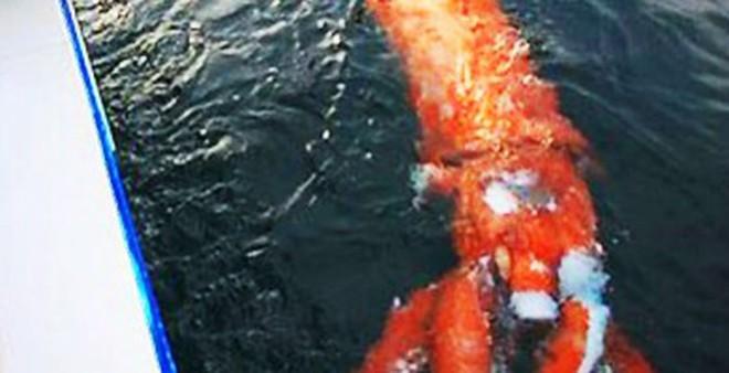 Nguyên nhân xuất hiện các sinh vật khổng lồ đáng sợ dưới biển