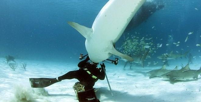 Cá mập cách 50m, bơi nhanh như Ánh Viên có thoát được không?